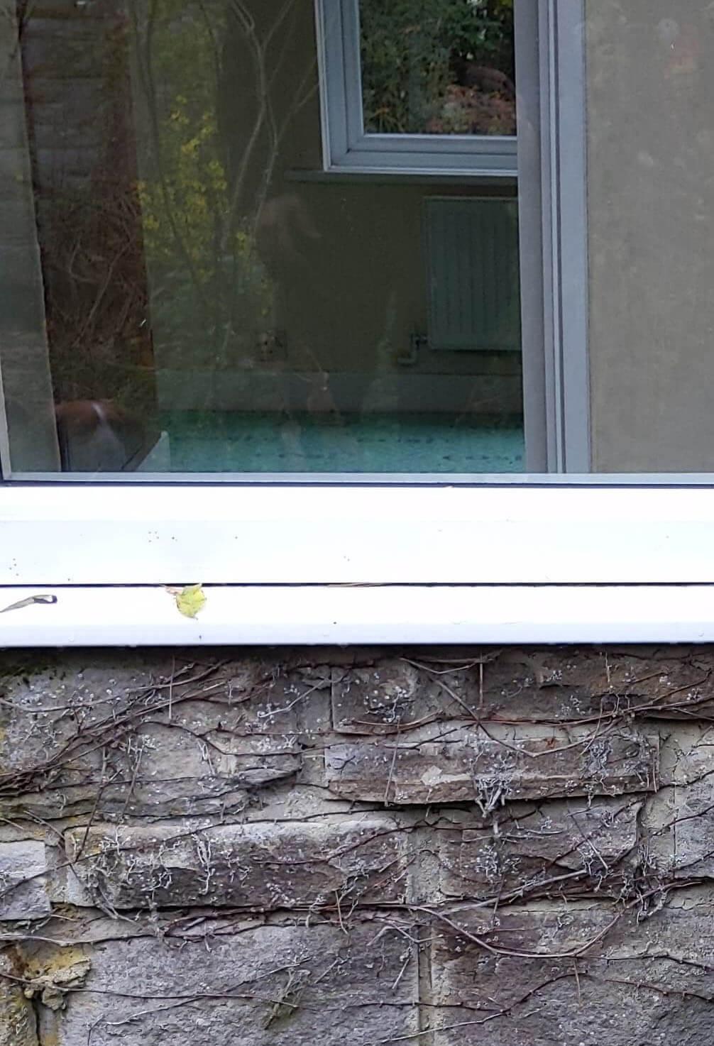 Northumbrian Windows
